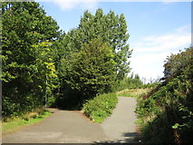 NZ2362 : The courses of two railway lines south of Dunston Staiths by Mike Quinn