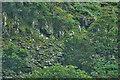 NY3121 : Lakeland Hound Trailing by Mick Garratt