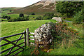 NY1015 : Dry stone wall near Bowness by Mick Garratt