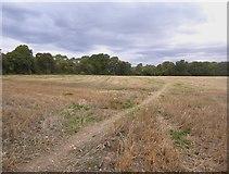 TQ4262 : Farmland west of Downe by Stefan Czapski