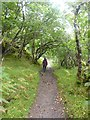NC0919 : Footpath through the birch woods by Oliver Dixon