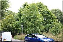 SU8322 : Woods by Petersfield Road, Trotton by David Howard