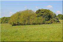 TQ6043 : Wooded pond by N Chadwick