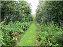 M9562 : Enclosed woodland track near Clooncah by Peter Wood