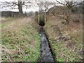 TQ1163 : Hersham: Surface water outfall by Paul Vanson Court by Nigel Cox