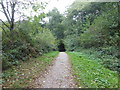 TQ6533 : Path around Bewl Water by Marathon