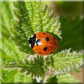 NJ0428 : Ladybird in Poorhouse Wood by valenta