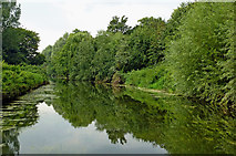 SK5907 : River Soar north of Belgrave Lock in Leicester by Roger  Kidd