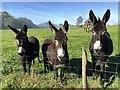 TQ0608 : Donkeys at Upper Barpham : Week 39