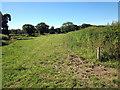 SJ5963 : Footpath across Oak Tree Farm by Jeff Buck