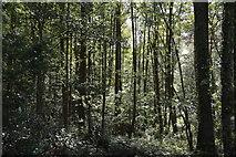 TQ6242 : Waterworks Wood by N Chadwick