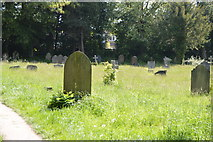 TQ6241 : Overgrown cemetery by N Chadwick