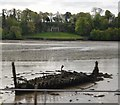 SX5156 : Wreck, The Laira by N Chadwick