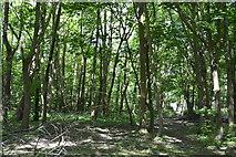 TQ6141 : Robingate Wood by N Chadwick