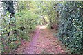 SU7939 : Footpath in Alice Holt Forest by John P Reeves