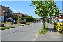 TQ6041 : Greggs Wood Rd by N Chadwick