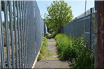TQ5941 : Footpath off Sandhurst Rd by N Chadwick