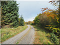 NZ0327 : Curving forest road in Pennington Plantation by Trevor Littlewood
