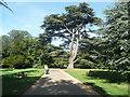 TL8161 : Driveway to Ickworth by Humphrey Bolton