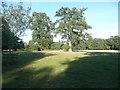 TL8161 : Parkland trees, Ickworth Park by Humphrey Bolton