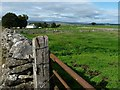 NY5815 : Sheep at Castlehowe Scar farm by Christine Johnstone