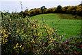 H3974 : Blackthorn hedge, Aghaleag by Kenneth  Allen