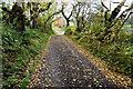 H5090 : Fallen leaves along Drumnaspar Road by Kenneth  Allen