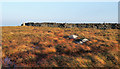NY9602 : Bog and wall near summit of Great Pinseat by Trevor Littlewood