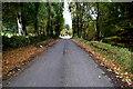 H5291 : Fallen leaves along Drumnaspar Road by Kenneth  Allen