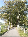 N5170 : Tree-lined avenue leading to Fore Abbey by Oliver Dixon