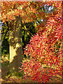 SO8995 : Red-leafed tree in autumn, Wolverhampton by Roger  Kidd