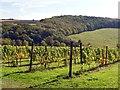 SE9332 : Vineyard on Little Wold by Graham Hogg