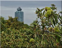 TQ1876 : View from Kew Gardens Treetop Walkway by Neil Theasby