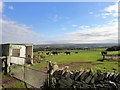 NZ1046 : Cattle beside Millershill Lane by Robert Graham
