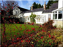 H4573 : Rosehips, Arleston House, Omagh by Kenneth  Allen