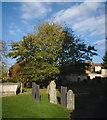 SK9324 : Churchyard tree by Bob Harvey