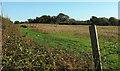 SX4863 : Pheasants near Pound by Derek Harper