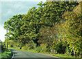 TQ2643 : Horse Hill by Derek Harper