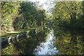 SJ3831 : Llangollen Canal near Broom Bridge by Stephen McKay