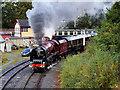 SD8010 : The Duchess at Bury South by David Dixon