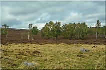 SK2480 : Derbyshire Dales : Moorland Scenery by Lewis Clarke