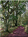 SO8282 : Waymarked track on Kinver Edge in Staffordshire by Roger  Kidd