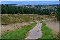 SK4762 : Ashfield : Silverhill Wood Country Park by Lewis Clarke