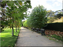 SK6464 : Lime walk, Rufford Country Park by Jonathan Thacker