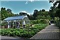 SS4917 : Rosemoor, RHS Garden: Greenhouse housing mainly peppers by Michael Garlick