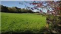 SX4772 : Pasture by the Tavistock Canal by Derek Harper