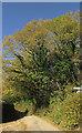 SX7968 : Tree near Woodland by Derek Harper