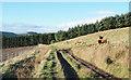 NO3742 : Farm road passing Dryburn by Trevor Littlewood
