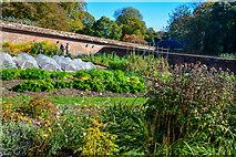 ST7734 : Wiltshire : Stourhead - Walled Garden by Lewis Clarke