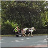 SJ9594 : Horse & cart on Dowson Road by Gerald England
